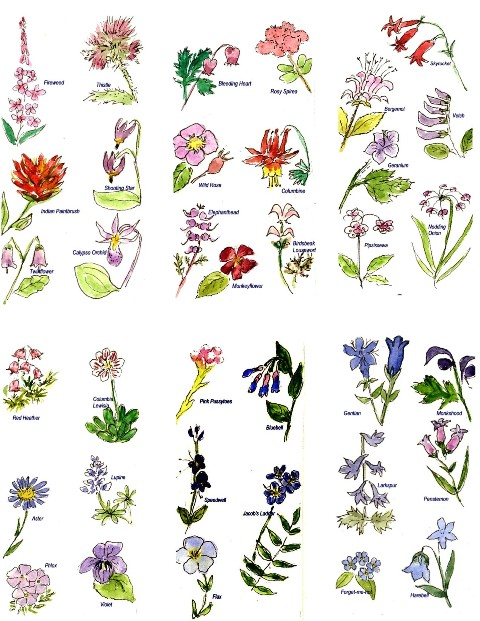 Images Of Different Types Of Flowers With Names