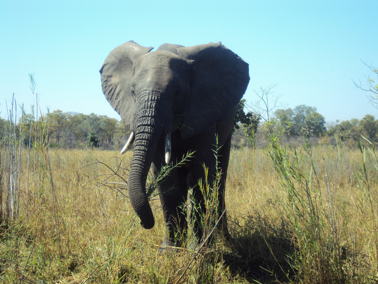 Malawi - A cheap destination for African Wildlife