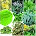 9 plante care vă CURĂȚĂ PLĂMÂNII și TRATEAZĂ AFECȚIUNILE RESPIRATORII