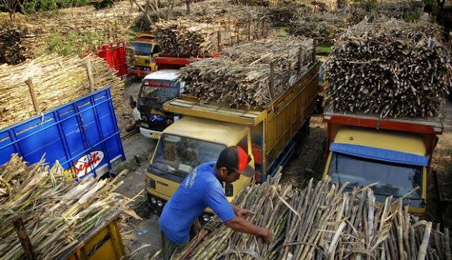 Logika Ngawur! Kementan: Pajak 10 Persen untuk Kebaikan Petani Tebu