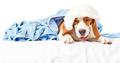 Obat batuk untuk anjing
