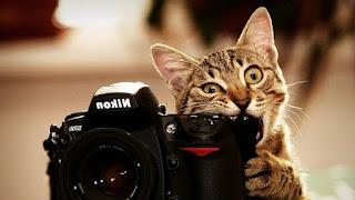 кошка и камера