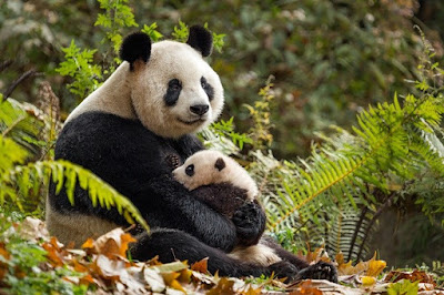 Born in China Disneynature Documentary