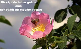 altın sözler, bahar sözleri, çiçekler, erbakan sözleri, mevsimler üzerine sözler, mevsimlerle ilgili sözler, mevsimlik sözler, papatya, sonbahar üzerine sözler, uğur böceği,