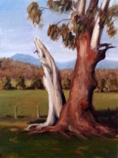 Oil painting of a manna gum with a split trunk (one half of which is dead), with eucalpyts in the middle distance and a mountain range in the far distance.