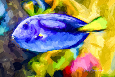 Blue Tang / Palette Surgeon Fish