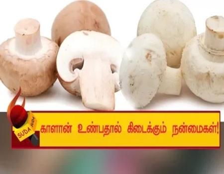 Health benefits of mushroom