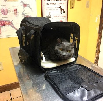 Cat inside carrier at vet check-up.