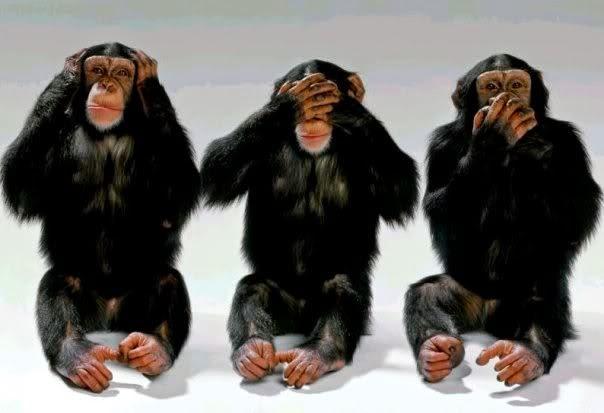 Scientists Success Translate Language Body Chimps | Science