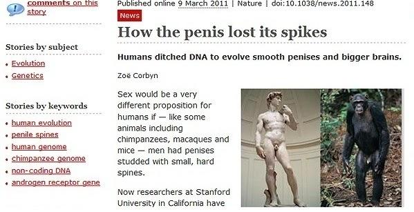 cu ce să comparăm penisul care ajută bine la erecție