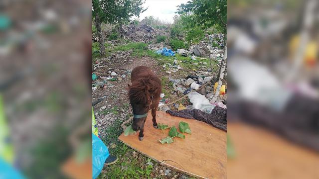В Башкирии в мусорку отравили лошадку