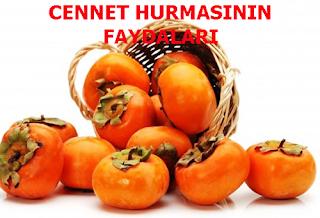 CENNET HURMASININ FAYDALARI