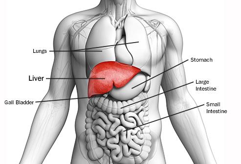 obat liver di apotik