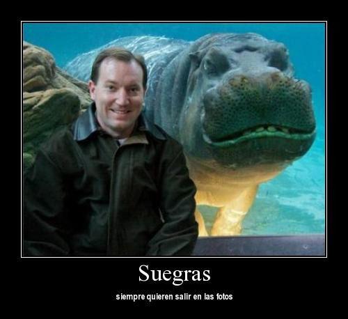 Hombre con hipopótamo. En el texto dice: suegras, siempre quieren salir en las fotos.
