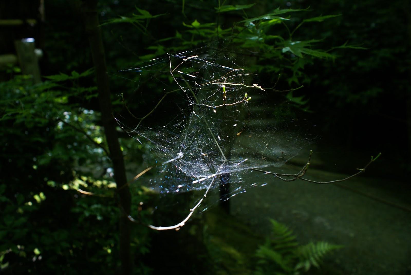 arashiyama kyoto japan gioji spring spiderweb