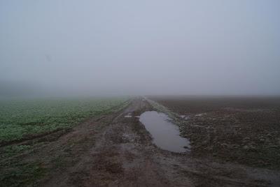 Ein Feld das im Nebel verschwindet. Ein brauner Feldweg führt direkt in die Nebelwand