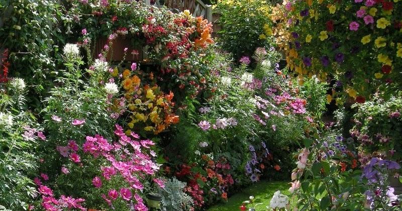Красивый сад в цветах фото