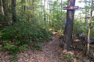 Maple Leaf Trail at Wendell State Forest (photo by Ben Kimball; copyright 2015)