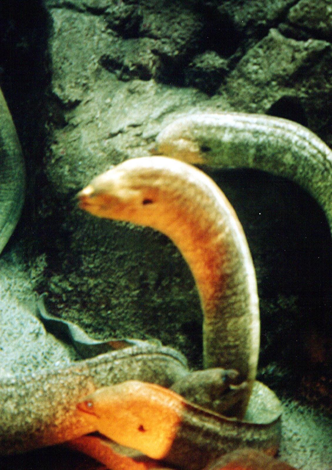Shukernature Does The Loch Ness Monster Have A Split