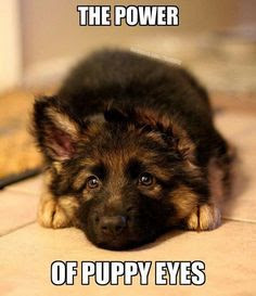 The power of puppy eyes