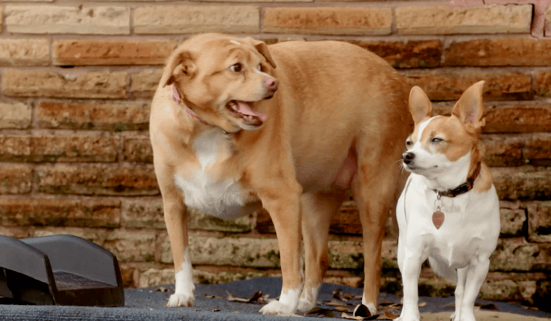 More Than 50% of Dogs Are Overweight