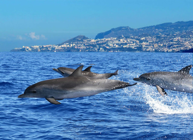 Blog Apaixonados por Viagens - Portugal - Ilha da Madeira
