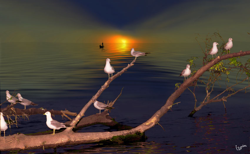 Igor Zenin Photographer