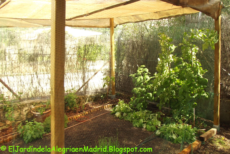 El jard n de la alegr a proteger del sol los arbustos de bayas con tela de sombreo - El jardin del sol ...