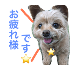 pomepu.fukuchan