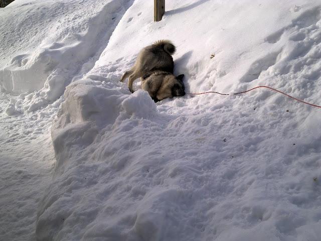 Mosku. lumi, kevättalvi