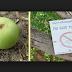 هل تعلم ماهي أخطر شجرة في العالم : احذر أن تلمسها أو تقف تحتها  !