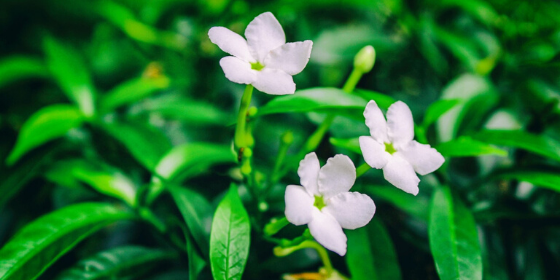 Flowers: 10 quotes to inspire you