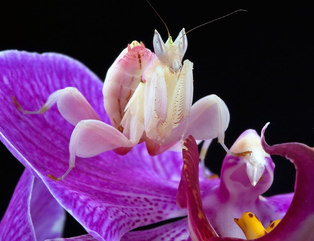 Insectos y su camuflaje
