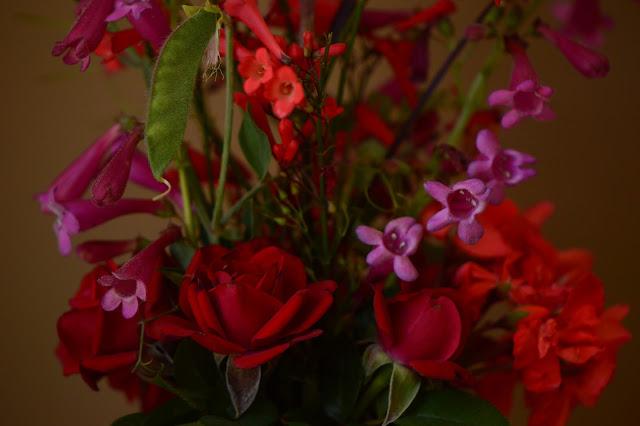 desert garden, small sunny garden, amy myers, monday vase meme, rose daniela, penstemon