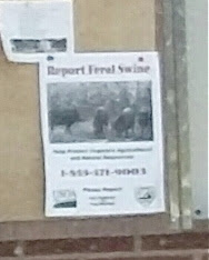 Va. Agricultural Dept. wants you to report feral swine.
