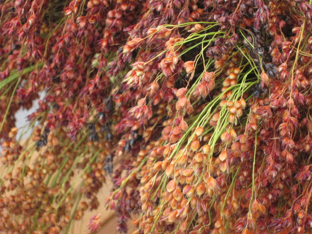 Broom Corn–or is it Broomcorn?   Root Simple