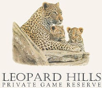 The Leopard Hills Lodge at the Sabi Sands Game Reserve in South Africa, a luxury resort with safari