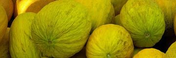 MedHermes lance deux nouvelles variétés du melon jaune au Maroc