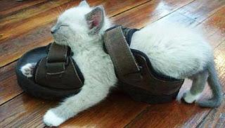 靴が大好きな可愛い猫7