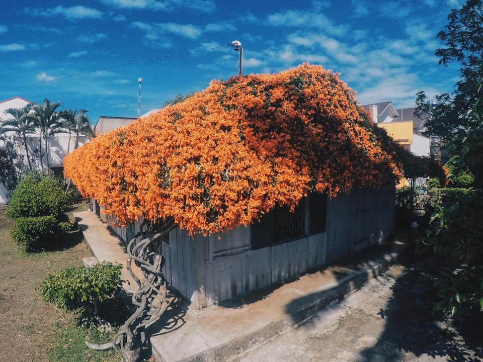 Lùng tọa độ ngôi nhà ở Bảo Lộc có mái lợp tràn ngập hoa gây sốt cộng đồng