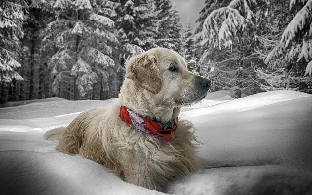 Hond in een dikke laag sneeuw