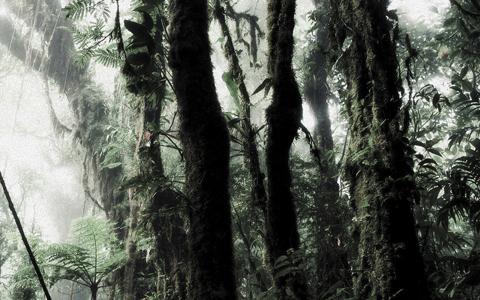 Deforestation reduces evapotranspiration speeding up climate change