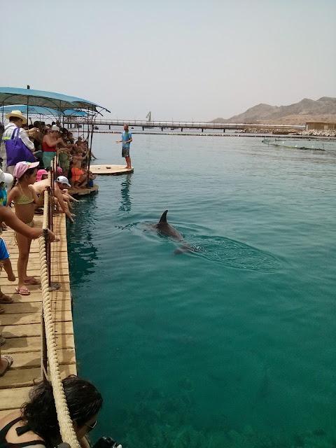 דולפינים שוחים לצד אנשים בריף