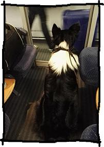 Zug fahren mit dem Hund