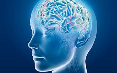 Μπορεί να αλλάξει ο εγκέφαλος; Πλαστικότητα εγκεφάλου.