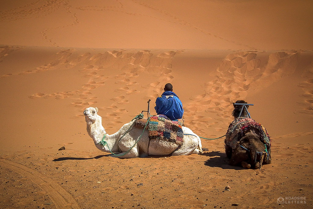 Camels waiting in the sand in Sahara of Morocco