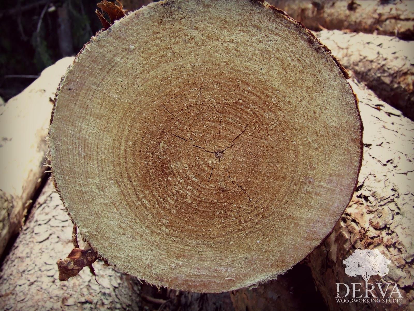 drewno cedrowe właściwości