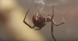 укусило насекомое к какому доктору обратиться