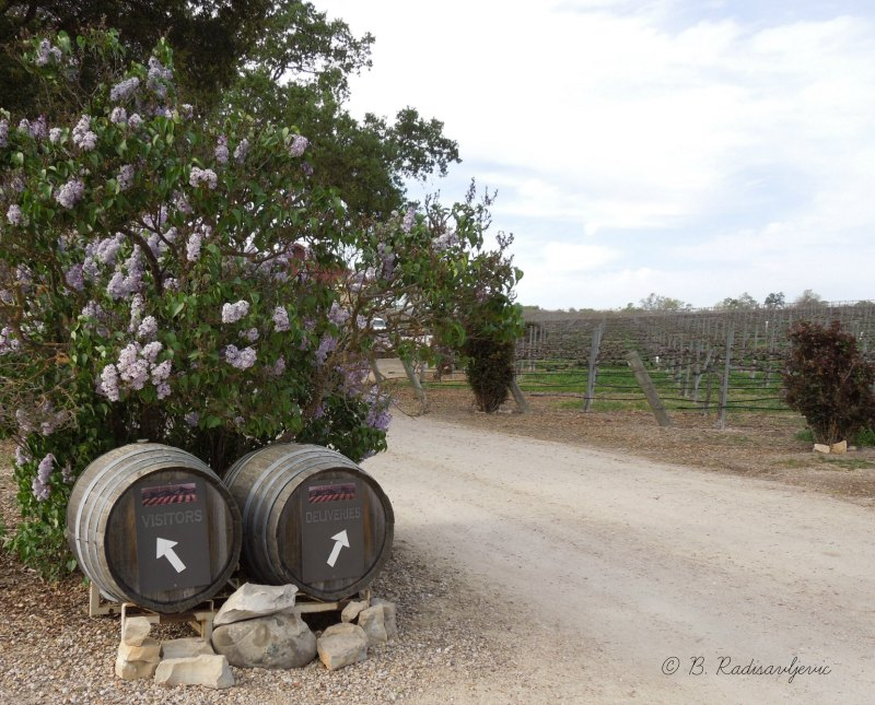 Zenaida Cellars Vineyards on the First Day of Spring