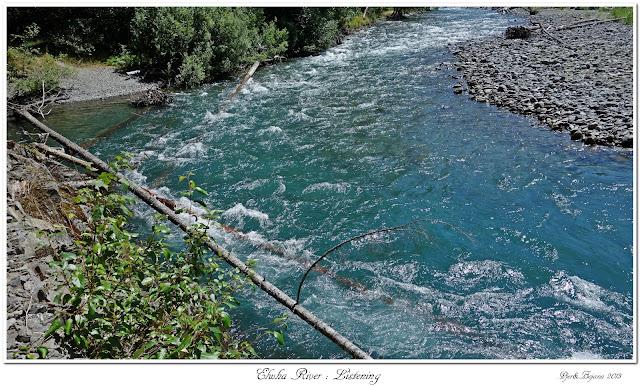 Elwha River: Listening